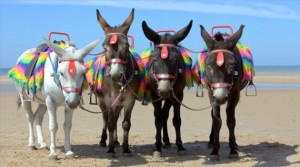 seaside_donkeys